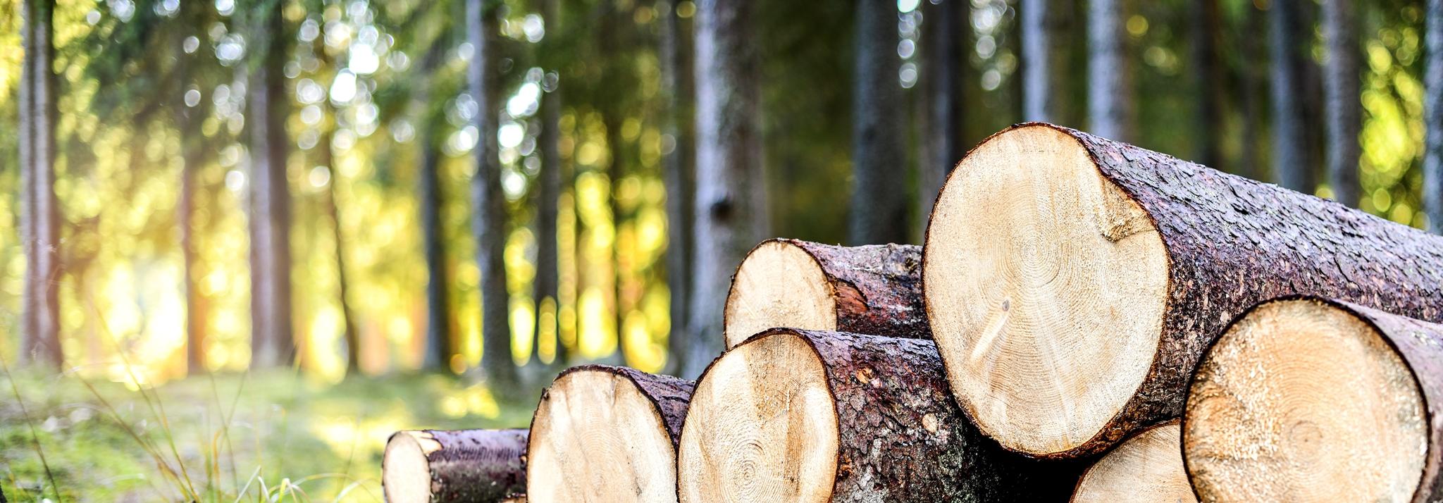 Scheitholz, Holzschnitzel, Holzpellet, Heizung